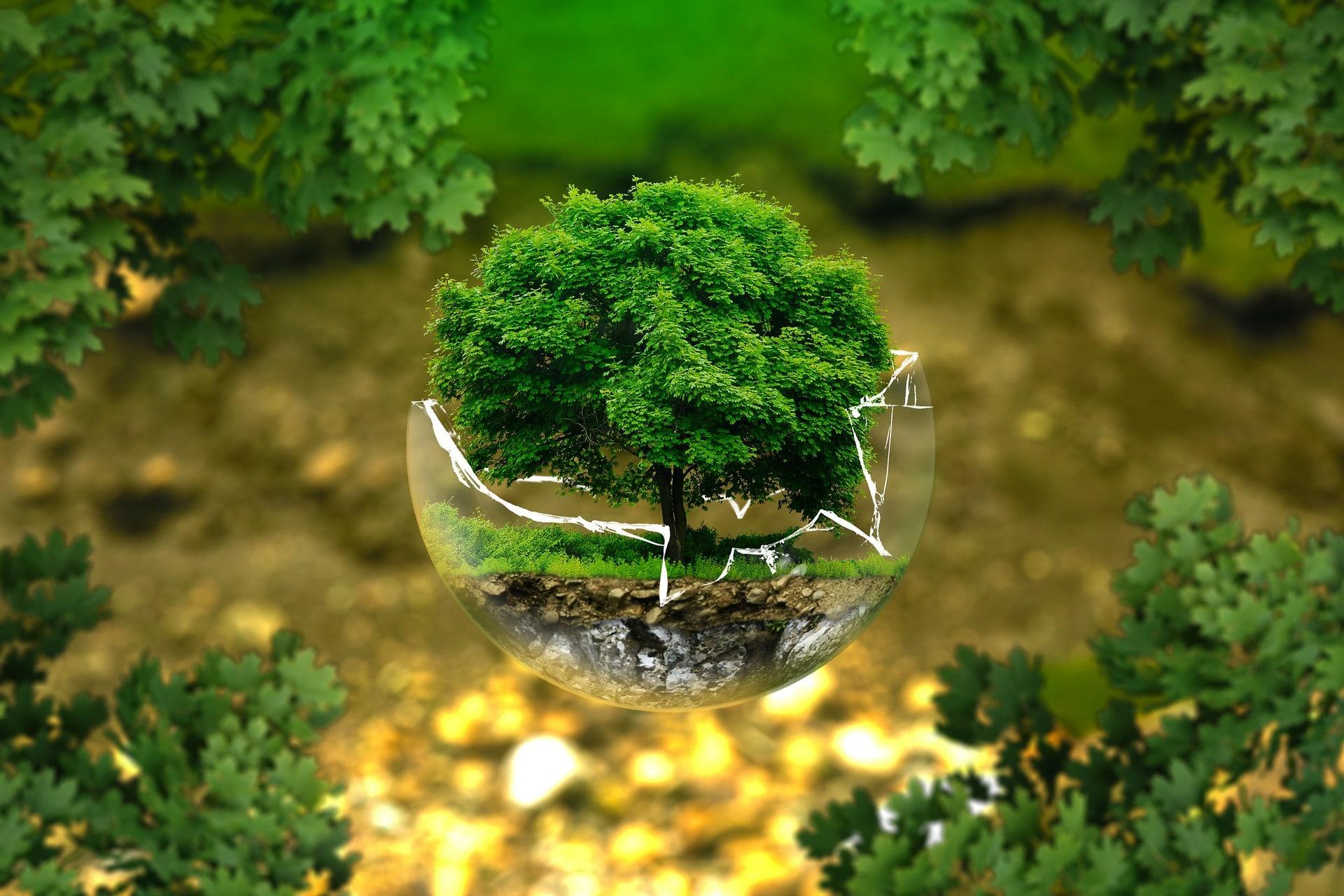 Econo-Ecolo, le guide des économies écologiques