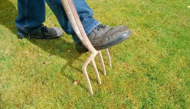 mousse-pelouse