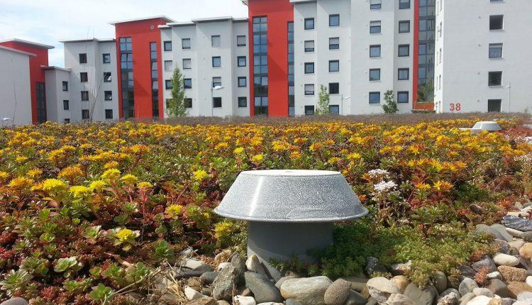 toiture-vegetale-milieu-urbain
