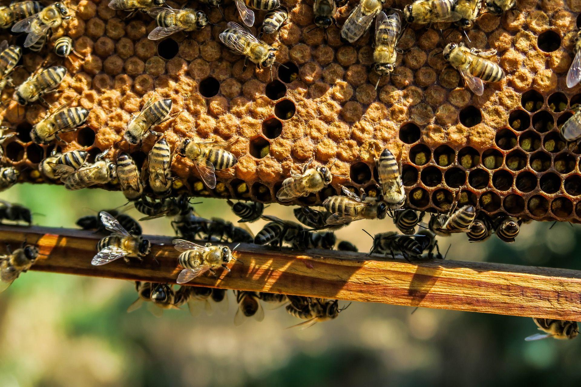 Reine abeille datant datant Epiphone Sheraton