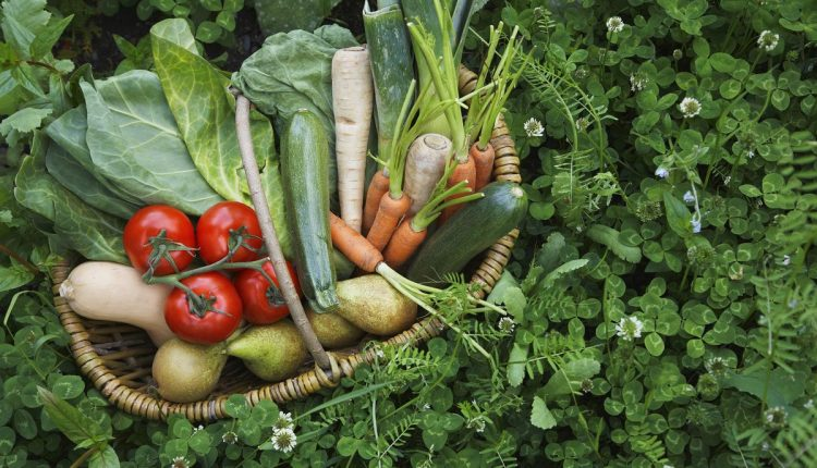 alimentation-vegetarien