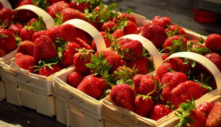 fruits-saison