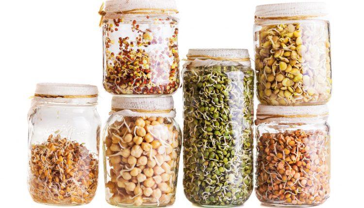 graines-germination