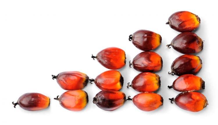 huile-palme-bio-