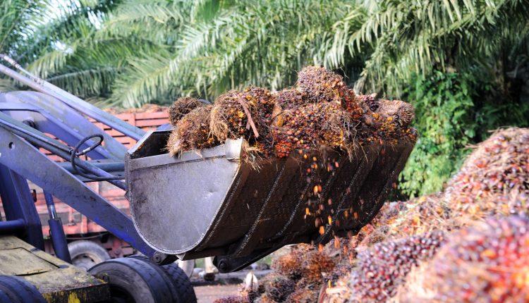 huile-palme-biologique