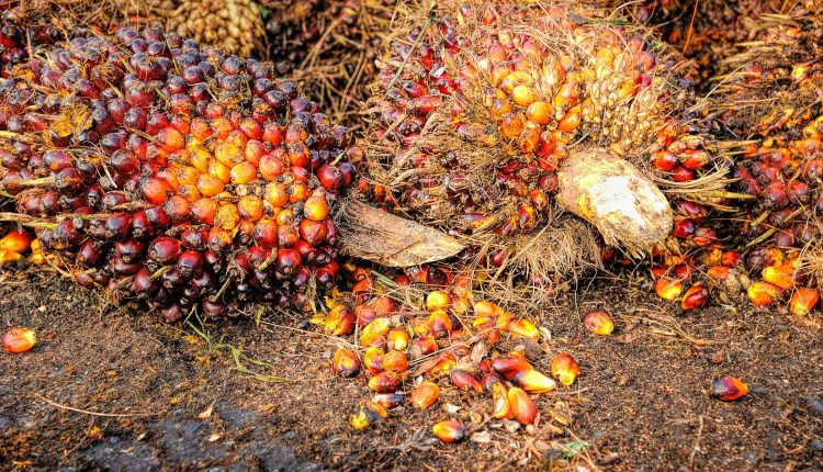 huile-palme-bio