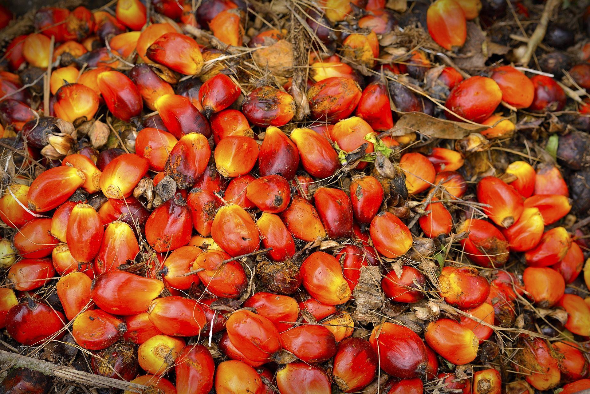 huile-palme-danger