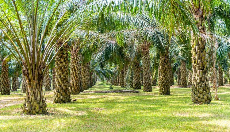 impacts-ecologique-huile-