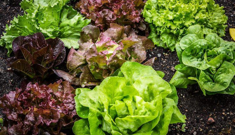 salades-bio