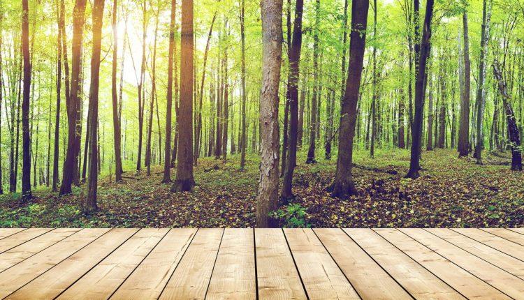 terrasse-bois-durable