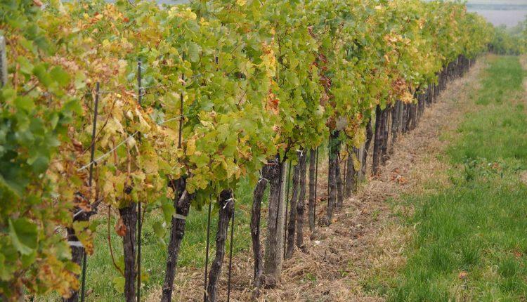 vin-biologique