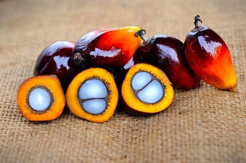 bio-huile-palme