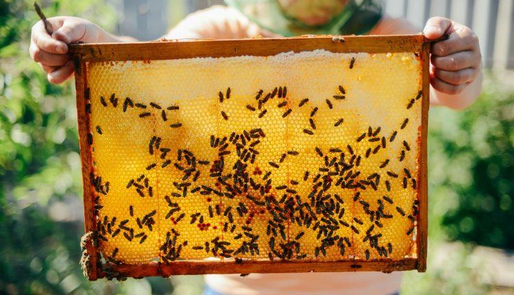 cadre-miel