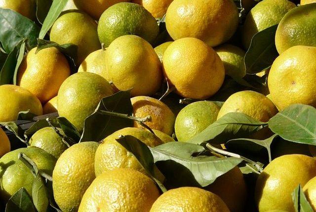 clementine-verte