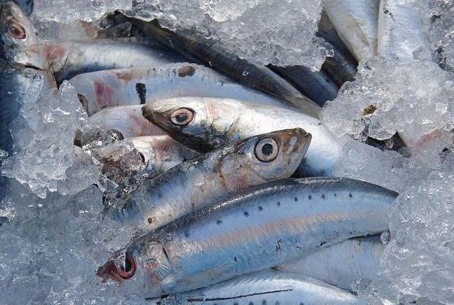 contamination-sardine