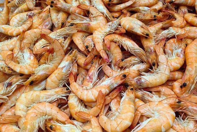 crevettes-elevage
