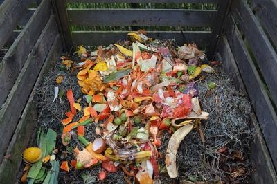 dechets-organiques-compost