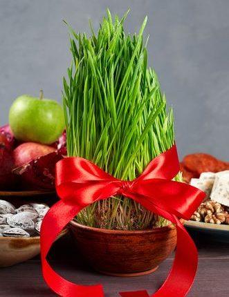 graines-germees-decoration