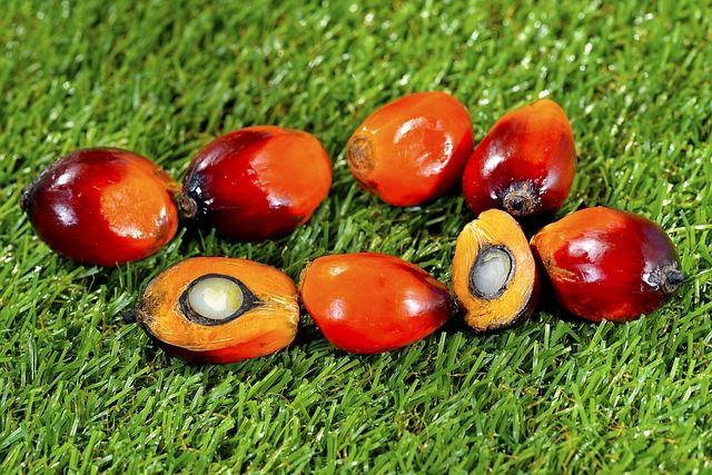 huile-palmiste-durable
