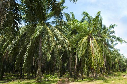 impacts-ecologique-huile