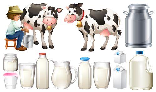 lait-frais-collecte