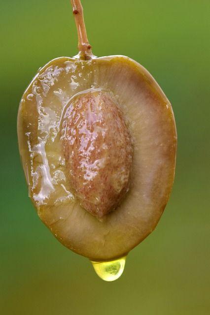 noyau-olive