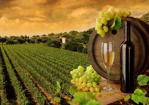 vigne-vin-biologique