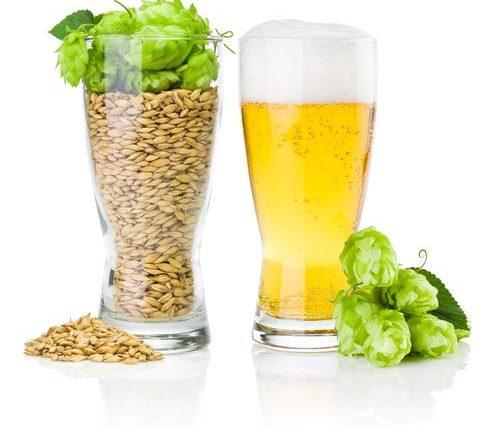 vin-biere-bio