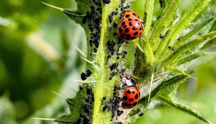 alternative-pesticides-jardin