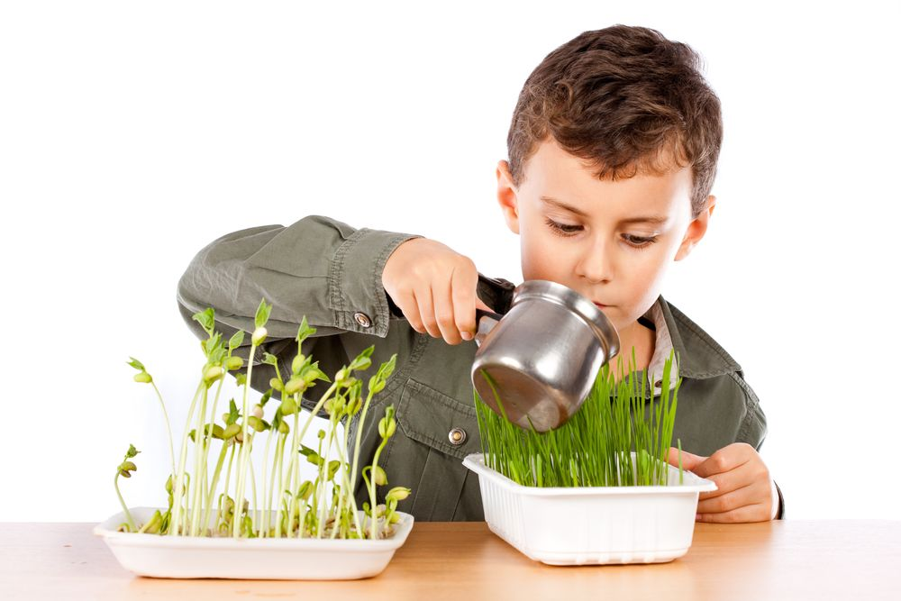 plantes-semences