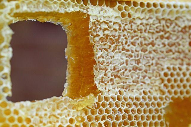 abeille-alveole-cire