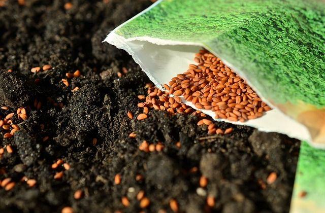 semences-potager