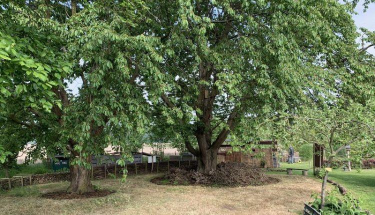 permaculture-arbre