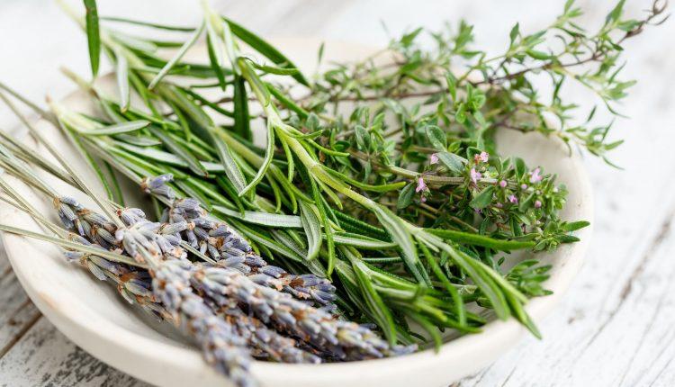 parfums-herbes-aromatiques