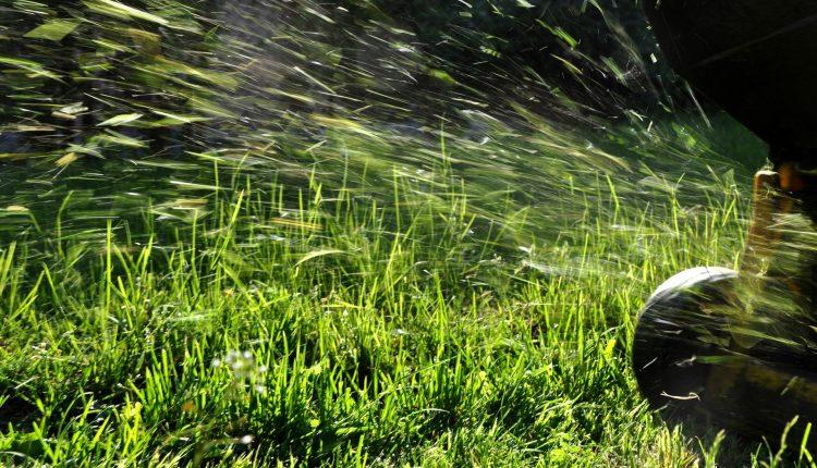 mulching-pelouse