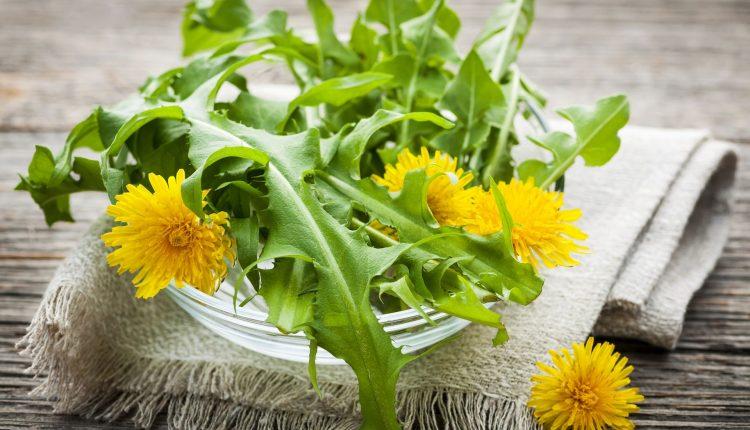 pissenlit-salade