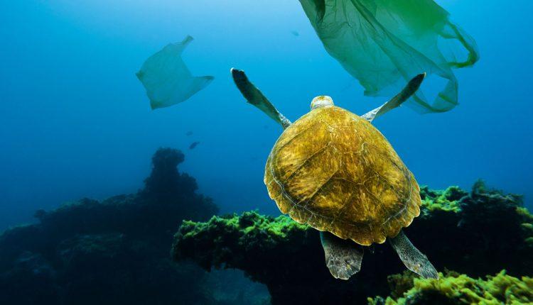 sac-meduse