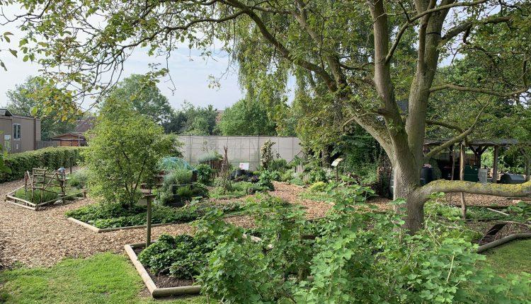 paillage-jardin