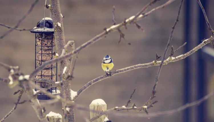 mangeoire-oiseau