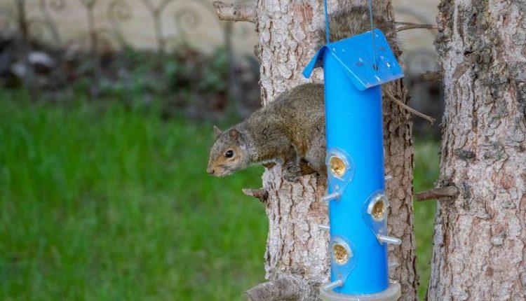 mangeoire-oiseau-ecureuil