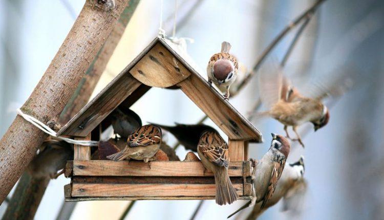 mangeoire-oiseau-especes