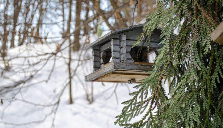 mangeoire-oiseau-maison