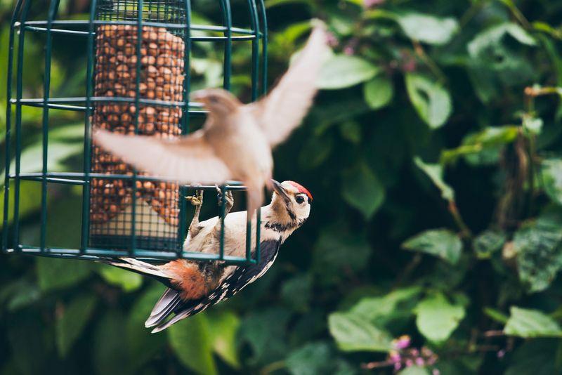mangeoires-oiseaux