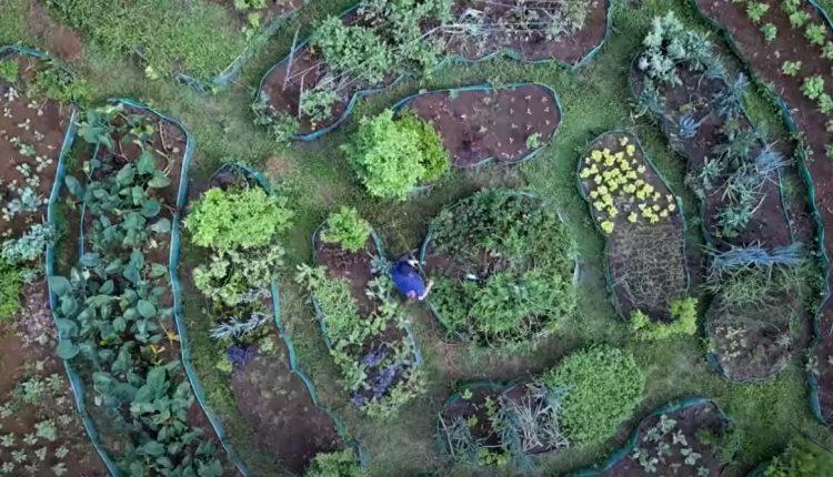 jardin-mandala-permaculture