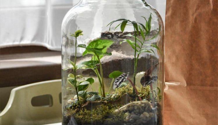 bocal-terrarium