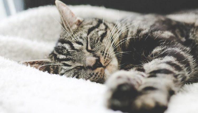 brume-oreiller-sommeil
