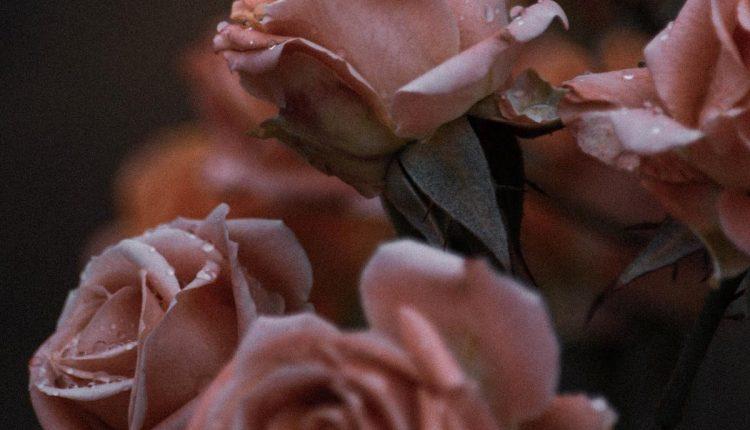 eau-rose